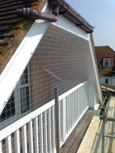 Pigeon Proofing Pontesbury