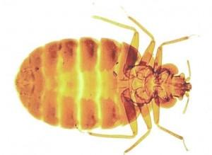 Pest Control Sascott