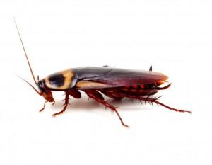 Pest Control Pontesford