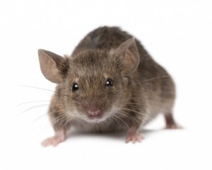 Pest Control Winnington